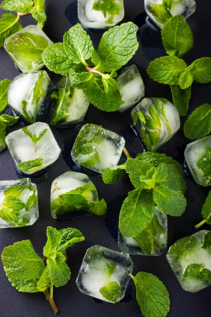 mint planting growing and harvesting mint plants the. Black Bedroom Furniture Sets. Home Design Ideas
