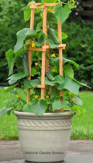 Container Gardening for Vegetables The Old Farmers Almanac