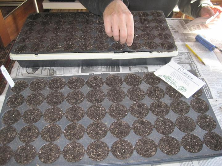 Growing onions varieties planting and harvesting the for Indoor gardening onions
