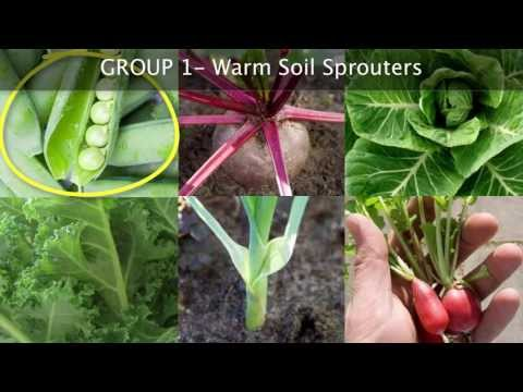 Planting a Vegetable Garden for Beginners How When and Where – When Do You Start Planting a Garden